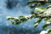 Winter + Christmas | Green