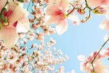Spring + Easter | Pink + Red