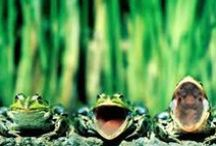 Funny Frogs, Fond Memories / My grandson and I used to take walks and look for frogs, great memories.
