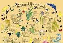 Herbs and Oils / by Katie Matthew