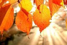 Fall / by Irene K