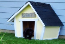 """In the Doghouse / For those times when you just plain mess up and need to say """"I'm Sorry"""""""