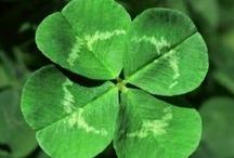 Irish Offerings / a little bit of Irish...
