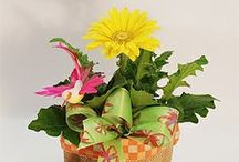 ...No, Thank YOU!!! / http://www.norfolkflorist.com/occasions/thank-you-flowers-virginia-beach/