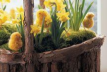 Spring / by Sara Lingerman