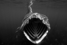 SHARK WEEK! / All hail the Discovery Channel's annual Shark Week! / by Houston Museum of Natural Science