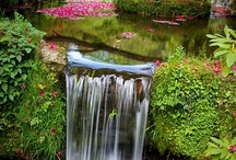 Gorgeous Gardens / Beautiful Gardens / by Barbara Blackwood