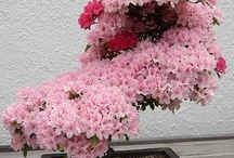 Beautiful Bonsai / Bonsai Plants, Flowers & Trees