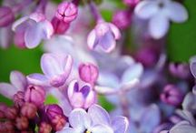 Purple makes me happy / by Laura Carver