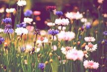 // Flowers.