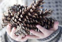 // Winter & Christmas.