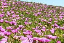Ground Covers - low maintenance alternatives to grass / by K Kraft
