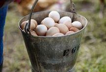 Hobbies- Raising chickens / by Lemonade Makin Mama