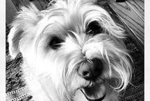 I love Dogs / by Shellie Adkison-Hilgendorf