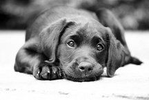 Because I was deprived of a family dog / by Carly Kurtz
