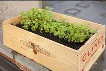 Gardening & Yardwork