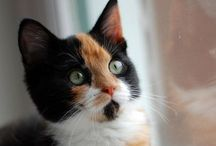 Cats / Lovely creatures...