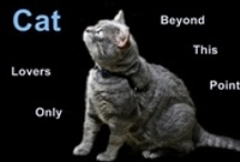 Kitties ~ Kitties ~ Kitties / Hi. Welcome to the Group board for domestic cat lovers. ~ Pin domestic cats only - no wild cats. ~ If you insist on saving anything other than domestic cats you will be removed from this board.  Enjoy!