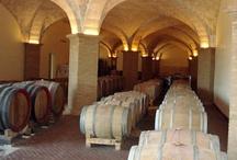 Vini Fattoria Acquaviva / La fattoria Acquaviva nasce nell'84 e inizialmente vi erano solo tre ettari di vigneti di bianco, oggi l afattoria si estende per ben 15 ettari e vi si producono diverse tipologie di vitigni: Sangiovese, Malvasia nera, Alicante, Trebbiano, Chardonnay, Verdello.