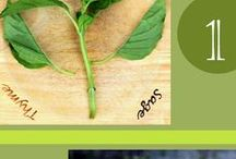 Food Gardening / Hints & tips for the veggie garden -- things to try maybe? / by Judith Dial