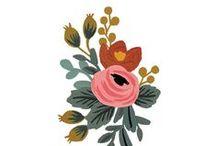 Flowers + Illustration