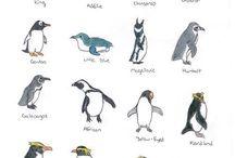 Teaching Zoology