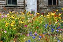 Home - Garden / by Anita @ Bloomin Workshop