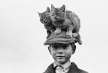 CAT-A-LOG