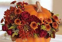 Fall & Thanksgiving Decor & Goodies / by Ali R.