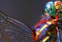 Buzz Off, Don't Bug Me / Creepy, crawly, buzzing pests, wondrous to grotesque.   / by Zahara Allura