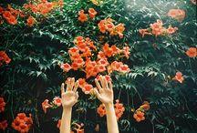Flora / by Caroline Toth