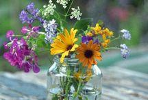 Flowers & Gardens / The Joys of Nature