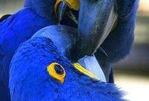 Birds of a Feather / by Ellen Walker
