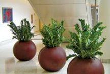 Plants simpel