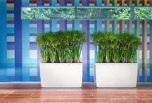Plants & Planters nr 01 / Large Plants Lechuza