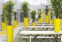 Plants & Planters nr 08 / ter Steege