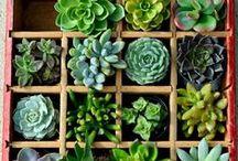 gardening / by Gwen Newland