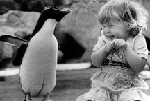 penguins / by Christine Gainey-Platt