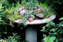 My Garden / Garden Ideas