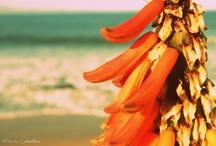 My Photography <3