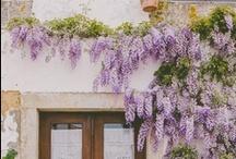 Fleurs + Botany / by Bonté
