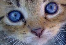 Ctextiles aime les chats