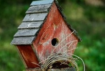 BIRD HOUSES, FOOD & WATER...Beautiful Living! / Please be careful when building or placing bird houses...the hot sun can make some of the houses act like ovens. Metals should be placed in very shady places....If you are using them for yard decoration...don't make a hole or paint one on the house. Think before you build or place! Just my opinion. :)  / by Donna Groves