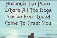 Doggy Love