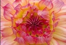 ❀ Un matin de mai fleuri ❀ / J'aime les fleurs et leurs couleurs... Je vous présente mes préférées :)