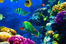 MARINE LIFE....FISH, GATORS, ETC. / Beautiful fish in tanks and ocean / by Linda Guy Phillips