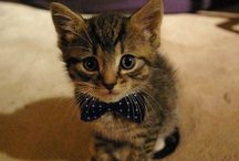We Heart Cats / We Heart Cats - here is our tribute to our furry feline friends.