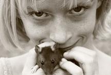 Pet Rats / by Danielle Thompson