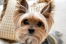 Animals, Yorkies and Other Pets / More of God's creatures