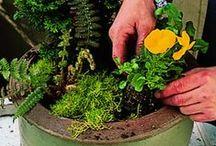 Plants 'n Pots / by Marina Van Rijswijk